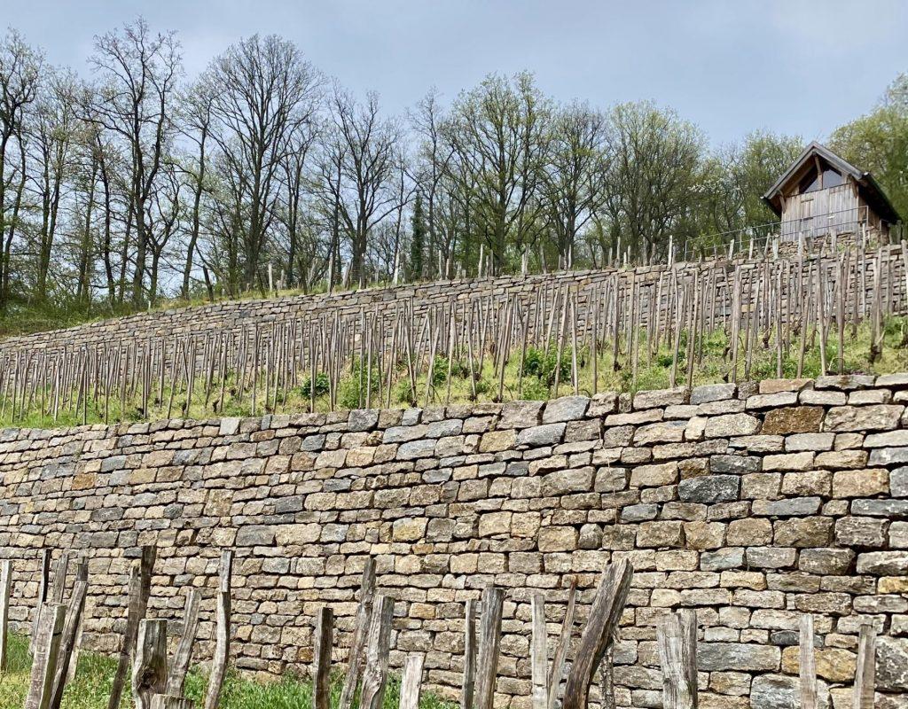 Historischer Weinberg bei Iphofen